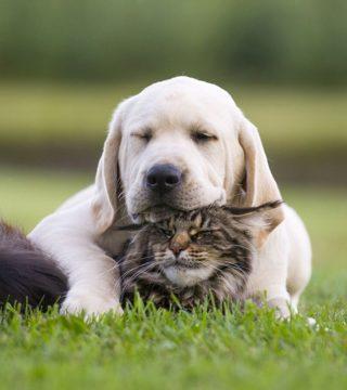 usługi weterynaryjne dla psów i kotów