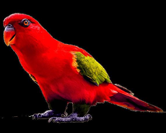 papuga weterynarz