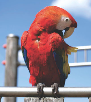 Ptaki i zwierzęta egzotyczne