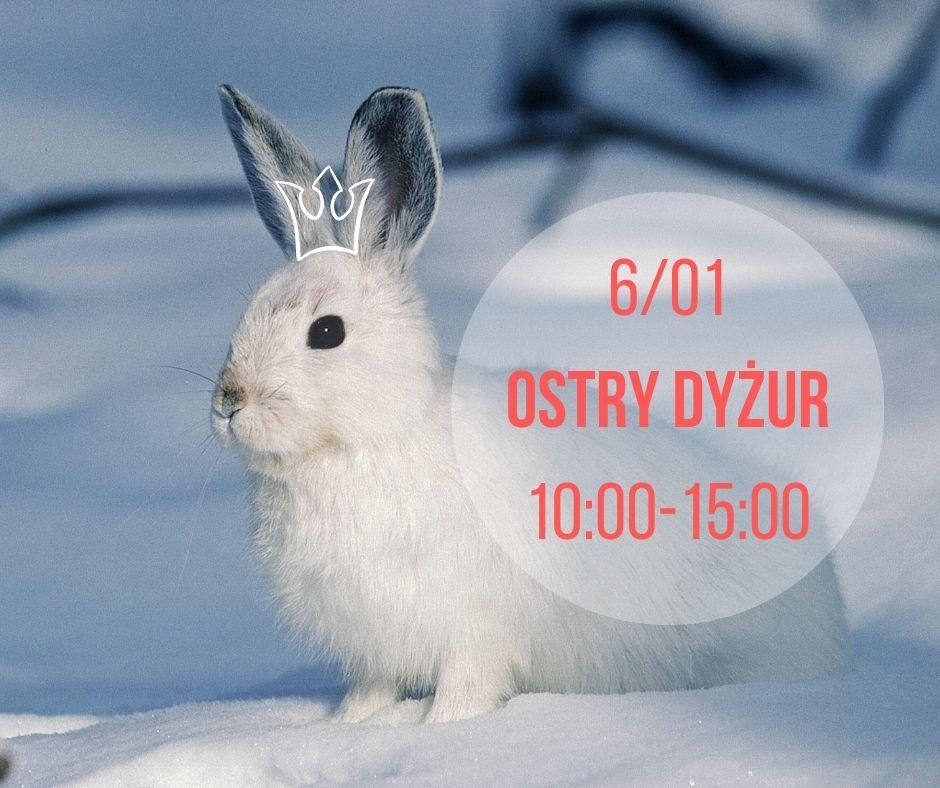 6_01-OSTRY-DYZUR-10_00-15_00-1.jpg